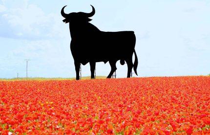 Spain Spring Poppies