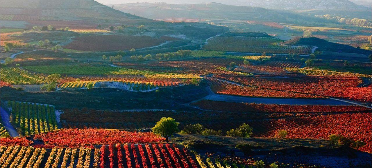 La Rioja Vineyards and mountains