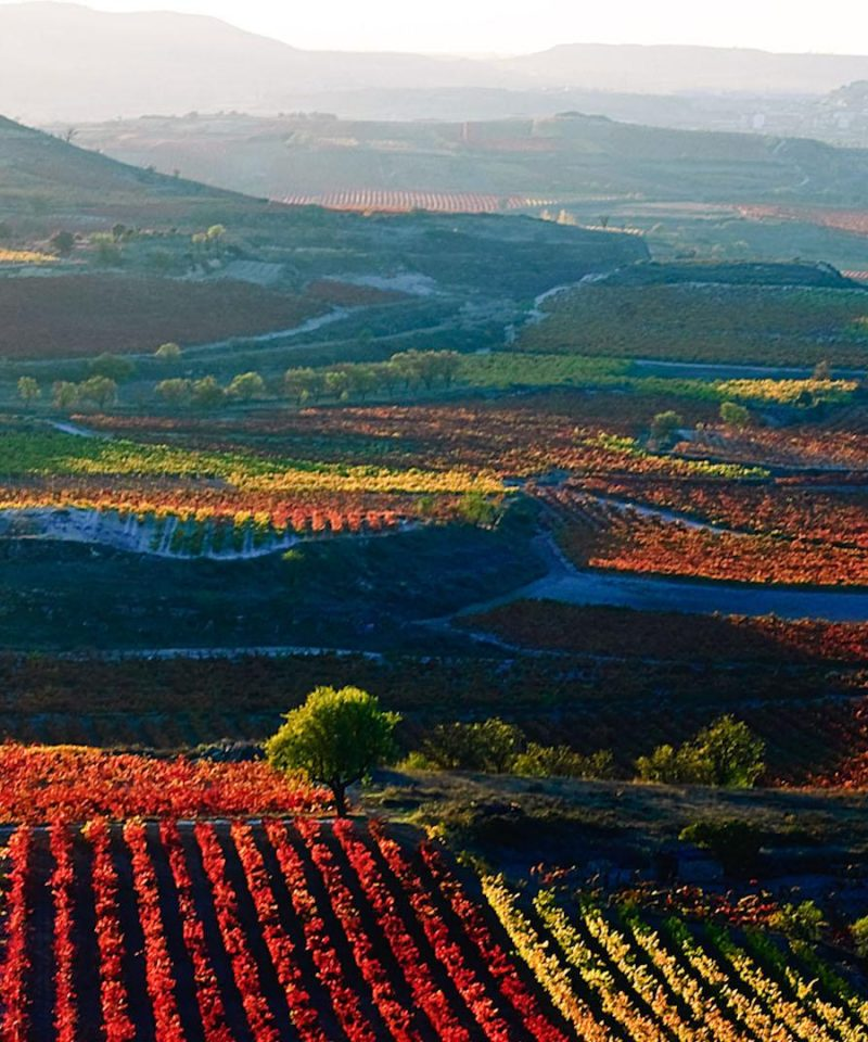 La Rioja Vineyards and mountains